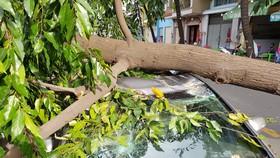 Gió lớn, cây ngã, nhà tốc mái, nhiều người bị thương