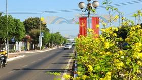 Dải phân cách bằng mai vàng dài 5 km độc nhất vô nhị ở Việt Nam. Ảnh: VŨ PHONG