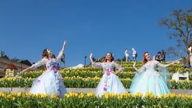 Thiên đường tulip hay điểm đến lý tưởng cho ngày Valentine và 8-3