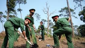 """Phủ xanh 2.000 cây Thông Mã Vĩ trên đồi cây """"Dâng Bác – Ơn Thầy"""""""