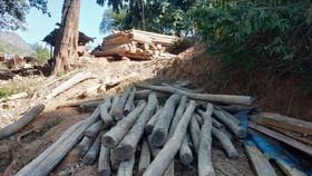 Nghệ An tiến hành xử lý gần 400m³ gỗ quý người dân vớt sau mưa lũ