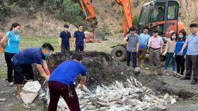 Thanh Hóa: Cá chết bất thường với số lượng hàng chục tấn
