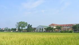 Thanh Hóa hỗ trợ tới 700 triệu đồng cho nghiên cứu, chọn tạo được 1 giống lúa lai F1