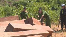 Phát hiện vụ khai thác trái phép gần 200m³ gỗ