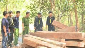 Bắt nguyên giám đốc công ty lâm nghiệp để mất rừng
