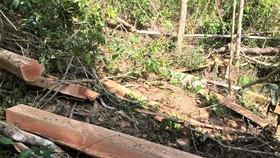 Phát hiện gần 100 cây căm xe bị cưa hạ tại Khu bảo tồn thiên nhiên Ea Sô