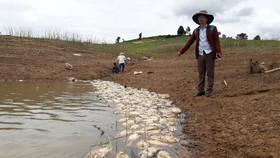 Cá chết trên hồ thủy điện
