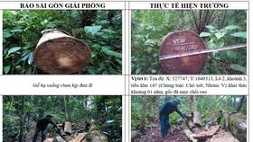 Kiểm tra, xử lý tình trạng phá rừng tại Ngọc Hồi