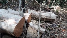 Bắt xe chở 5,8 khối gỗ lậu