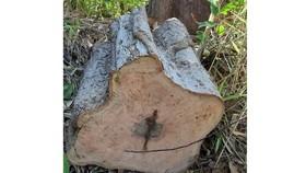 Ban Quản lý rừng phòng hộ để mất hơn 9.100 ha rừng