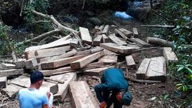 Kon Tum: Rừng già bị tàn phá, gỗ tập kết la liệt