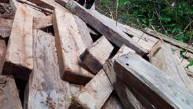 Vụ rừng già Kon Tum bị tàn phá: Gỗ vi phạm không ngừng tăng