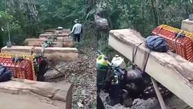 Bắt nóng 11 đối tượng đang vận chuyển gỗ lậu