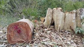 Khởi tố 3 vụ phá rừng ở biên giới Ia Chía