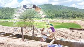 Ruộng đồng khô khát bên công trình thủy lợi trăm tỷ chưa bàn giao đã nát