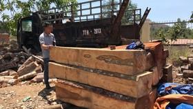 Khởi tố vụ cưa hạ trái phép 119 cây gỗ