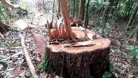 Gia Lai: Khởi tố vụ phá rừng ở xã Hra