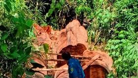 Khởi tố 4 lâm tặc cưa hạ 28m³ gỗ trái phép