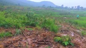 Để mất 34 hecta rừng, lãnh đạo xã xin rút... kinh nghiệm
