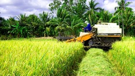 Rice farmers enjoy bumper harvest, high prices in Mekong Delta