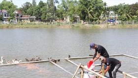 Phát triển bền vững từ mô hình nuôi cá nước ngọt