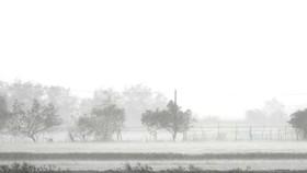 Quảng Bình mưa trắng trời, Huế cây cối ngã đổ