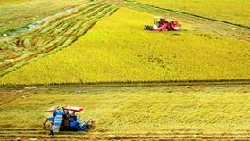 Bước chuyển nông nghiệp ĐBSCL