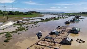 Quản lý, sắp xếp ổn định vùng nuôi cá bè trên hồ Trị An