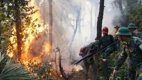 Để cháy rừng, một người dân bị phạt 90 triệu đồng
