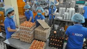 Chế biến trứng tại Công ty cổ phần Thực phẩm Vĩnh Thành Đạt. Ảnh: CAO THĂNG