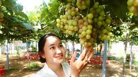 Chị Trần Thị Thúy bên vườn nho của mình