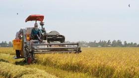 Ứng dụng cơ giới vào thu hoạch lúa ở ĐBSCL