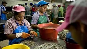Thái Lan ban hành chính sách mới dành cho lao động nước ngoài