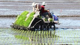 Tín hiệu tích cực từ ngành nông nghiệp