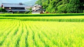 Đảm bảo an ninh lương thực đến năm 2030