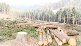 """Ý tưởng """"xót của"""" liệu có ngăn cản được những hành vi tận diệt thiên nhiên như phá rừng?"""