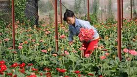 Giá rau, hoa Đà Lạt tăng đột biến