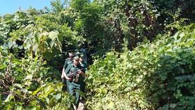 Triển khai các phương án mới truy lùng phạm nhân trốn trại Triệu Quân Sự