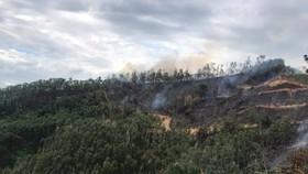 Khu vực rừng keo bị cháy, nơi phát hiện thi thể ông K.