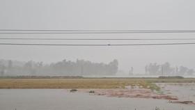 Một số khu vực có nguy cơ mất mùa do lúa bị ngâm trong nước quá lâu