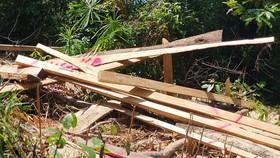 Hiện trường vụ phá rừng phòng hộ Trà Bui (huyện Bắc Trà My, tỉnh Quảng Nam) vào cuối tháng 9 vừa qua