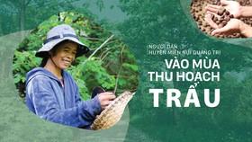 Người dân huyện miền núi Quảng Trị vào mùa thu hoạch trẩu