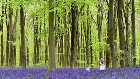 Nước Anh sẽ trồng cây gấp ba lần trong ba năm tới để chống lại biến đổi khí hậu