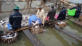 Xuất khẩu tôm và cá tra đang phục hồi, bứt phá ở thị trường Mỹ