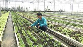 Phát triển nông nghiệp gắn với đô thị