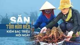 Săn tôm hùm biển kiếm bạc triệu mỗi ngày