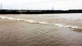 """22 tàu cá Bình Định đang """"chạy"""" bão số 12 ở ngoài biển"""