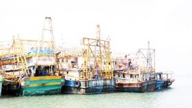 Vẫn còn nhiều tàu cá 67 chưa mua được bảo hiểm để ra khơi
