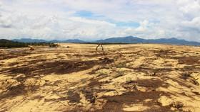 Nhiều héc ta rừng phòng hộ ven biển Bình Định bị san phẳng