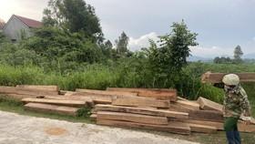 Nhà nhân viên bảo vệ rừng cất giấu 155 khúc gỗ rừng không phép